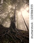 Old Tree Roots In A Forest Wit...