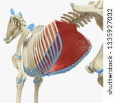 3d rendered medically accurate... | Shutterstock . vector #1335927032