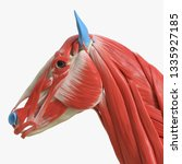 3d rendered medically accurate... | Shutterstock . vector #1335927185