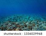 Underwater Seascape Coral Reef...
