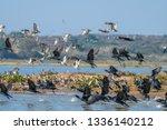 various water birds at bueng... | Shutterstock . vector #1336140212