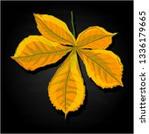 leaf autumn colorful... | Shutterstock . vector #1336179665
