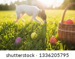easter eggs in a basket on the... | Shutterstock . vector #1336205795