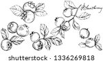 vector blueberry black and...   Shutterstock .eps vector #1336269818