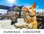 chihuahua dog having a coffee... | Shutterstock . vector #1336322408