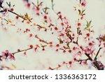 beautiful blooming peach trees... | Shutterstock . vector #1336363172