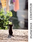 back view of cute little black... | Shutterstock . vector #1336454528