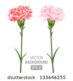 two flowers on a white... | Shutterstock .eps vector #133646255
