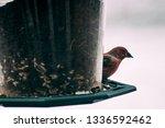 Finch On A Bird Feeder In Winter