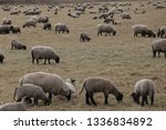 outdoor view of flock of sheep... | Shutterstock . vector #1336834892