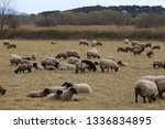 outdoor view of flock of sheep... | Shutterstock . vector #1336834895
