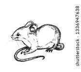 mouse. hand drawn vector animal ... | Shutterstock .eps vector #1336947638