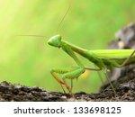Praying Mantis   Mantis...