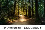 Forest In British Columbia With ...