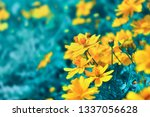 blossom nature background ... | Shutterstock . vector #1337056628