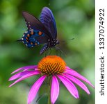 A Swallowtail Butterfly On A...