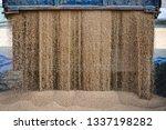 technique pours grain at the... | Shutterstock . vector #1337198282