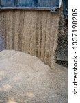 technique pours grain at the... | Shutterstock . vector #1337198285