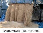 technique pours grain at the... | Shutterstock . vector #1337198288