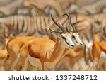 big group of animals  namibia.... | Shutterstock . vector #1337248712