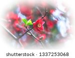 spring blooming quince.... | Shutterstock . vector #1337253068