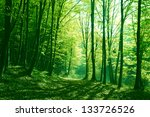 sunlight in the green forest ... | Shutterstock . vector #133726526
