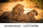 Lion Couple After Mating In...