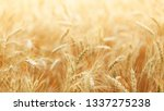 Ears Of Wheat Background
