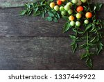 many tomatoes have both mature... | Shutterstock . vector #1337449922
