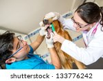 Vet Cleaning Teeth Of A Dog...