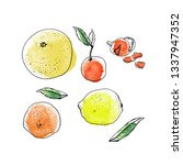 citrus fruits ink and...   Shutterstock .eps vector #1337947352
