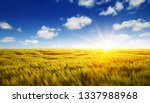 wheat field and sun in the blue ...   Shutterstock . vector #1337988968