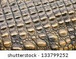 Crocodile Skin Texture. Shot In ...