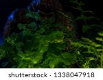 Stock photo bigfoot peeking through foliage on a black background with colored gels 1338047918