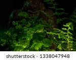 Stock photo bigfoot peeking through foliage on a black background with colored gels 1338047948