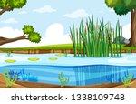 A Nature Swamp Landscape...
