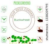 microgreens buckwheat. seed... | Shutterstock .eps vector #1338209795