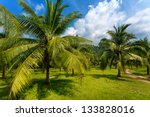 palm grove | Shutterstock . vector #133828016