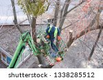 tree pruning and sawing by a... | Shutterstock . vector #1338285512