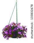 Hanging Basket Of Flowers...