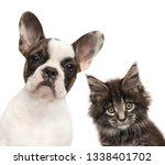 Stock photo kitten and puppy together isolated on white background baby animal theme 1338401702