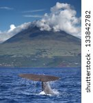Sperm whale starts a deep dive in front of volcano Pico, Azores islands - stock photo