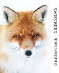 fox in natural habitat | Shutterstock . vector #133853042