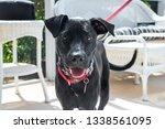 beautiful young black dog... | Shutterstock . vector #1338561095