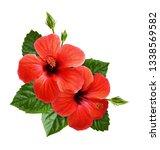 red hibiscus flowers in corner... | Shutterstock . vector #1338569582