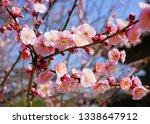 pink flower blooms of the... | Shutterstock . vector #1338647912