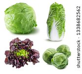 collection of fresh cabbages... | Shutterstock . vector #1338682562