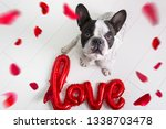 french bulldog with love shape...   Shutterstock . vector #1338703478