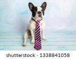french bulldog posing in tie...   Shutterstock . vector #1338841058