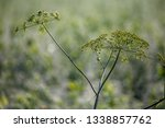 closeup of rural weed on nature ... | Shutterstock . vector #1338857762